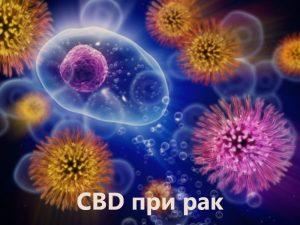 CBD масло при рак