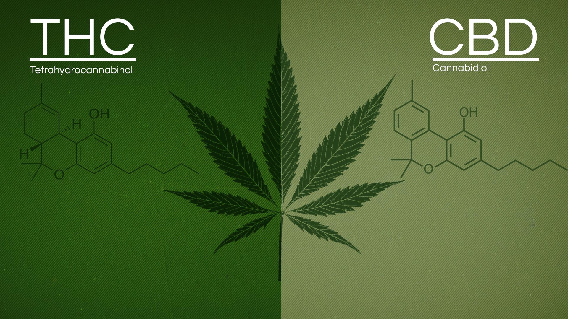 Разлики между CBD и THC