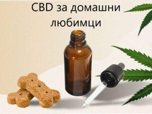 CBD масло за животни